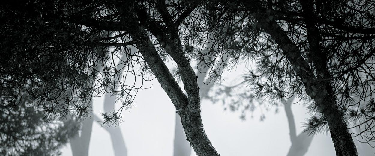 NEEDLEMIND PHOTOGRAPHY